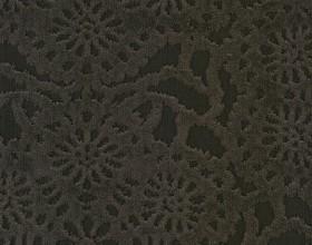 cygnus-brownie-20_color