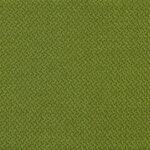 Lime 501